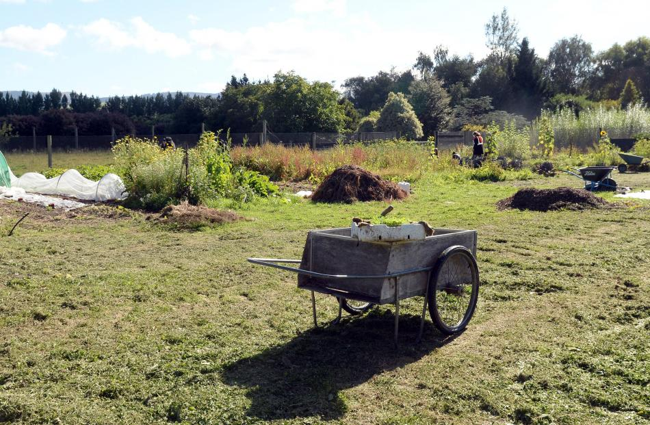 A barrow full of seedlings, waiting to be planted, at Kowhai Grove. Photos by Linda Robertson.