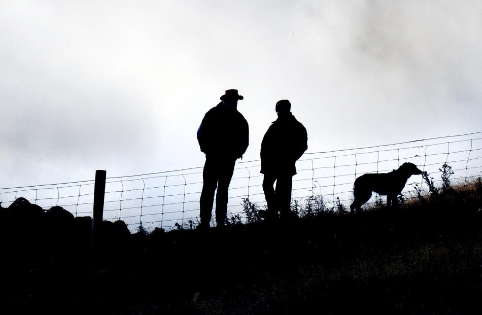 Shepherds hold sheep at the top of the course. Photos by Stephen Jaquiery.