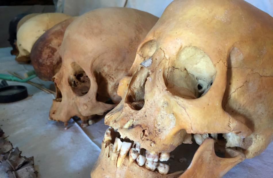 Skulls are found by Egyptian archaeologists at the tomb of Userhat. Photo: Reuters