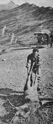 Deer recovery in 1963.