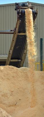 Some of the up to 90cu m of sawdust used daily to fuel the boiler at Pan Pac's redeveloped...