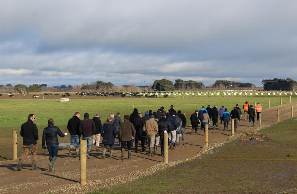 Visitors to the dairy hub head down the lane to look at winter crops planted on the farm.