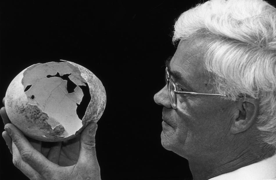 Mr Darby examines a moa egg at the Otago Museum in 1995. Photo: ODT.