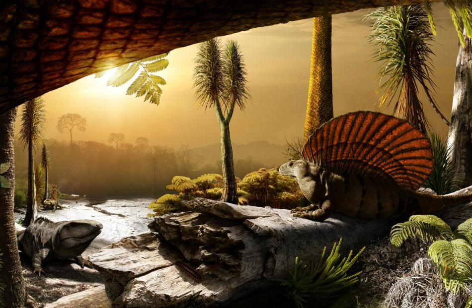 """The sail-backed Dimetrodon was among the pelycosaurs (""""basin lizard''), which evolved into a..."""