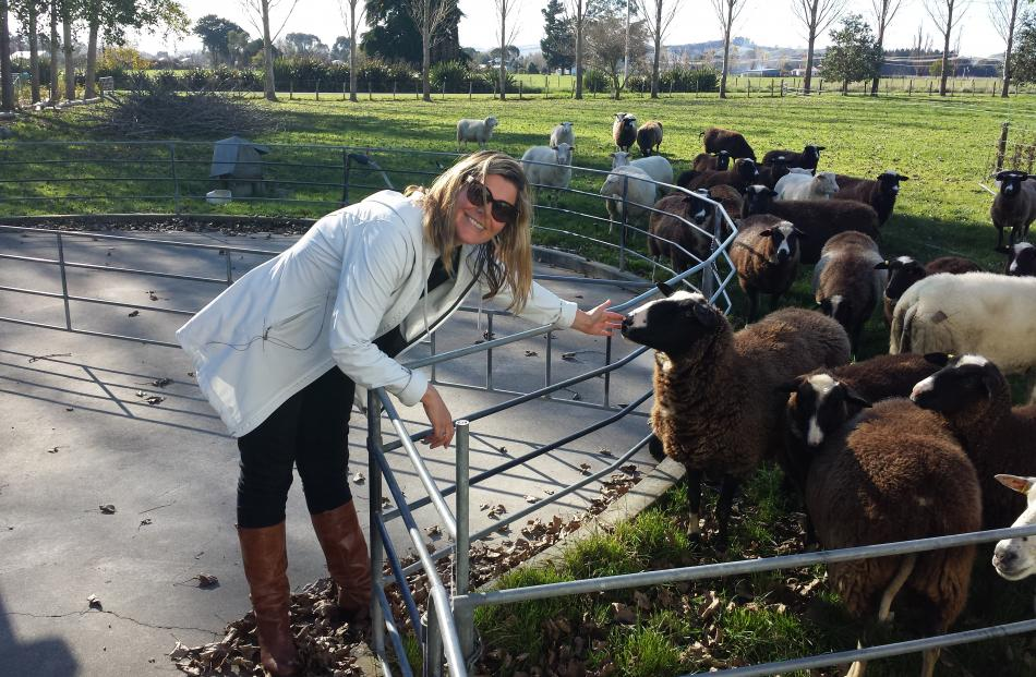 Wools of New Zealand director Lucy Griffiths checks out stock at Kingsmeade Sheep Cheese, in...