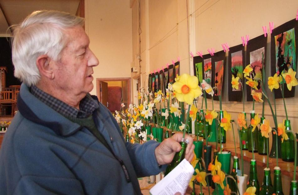 Ron Abernethy judges daffodils at Outram in 2013.