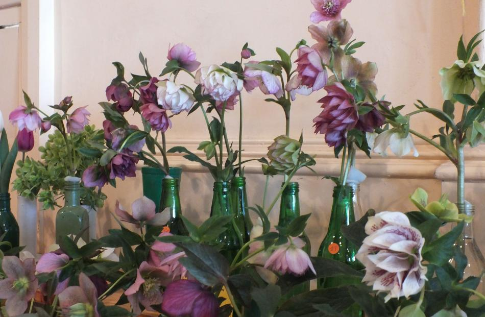 There is usually a good selection of winter roses (hellebores) at spring shows.