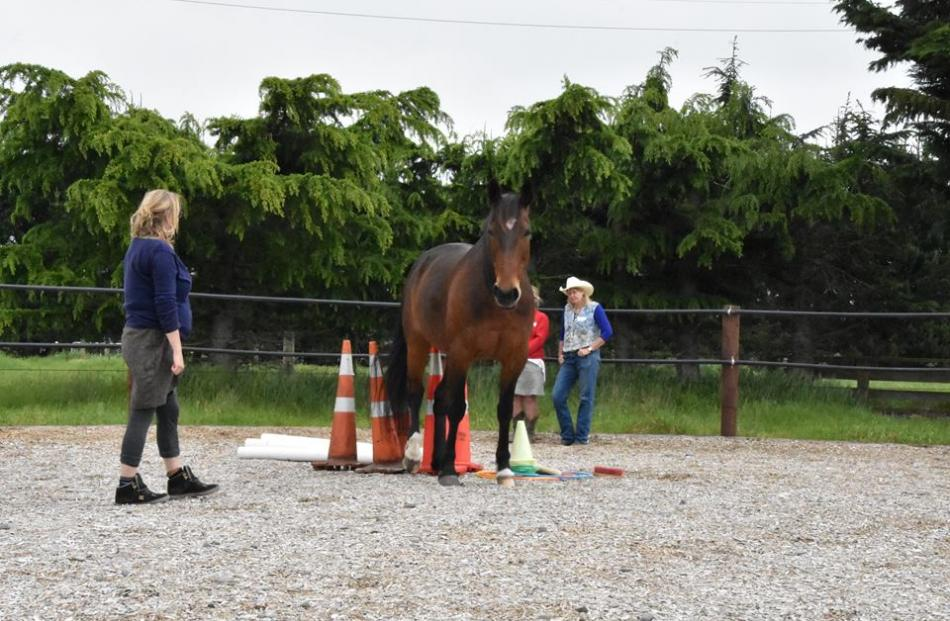 The benefits of equine therapy were promoted during Mental Health Awareness Week and North Canterbury's Community Wellbeing Week last month.