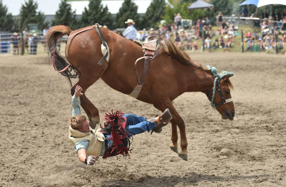 Sam Brown takes a tumble in the second-division bareback section last year.