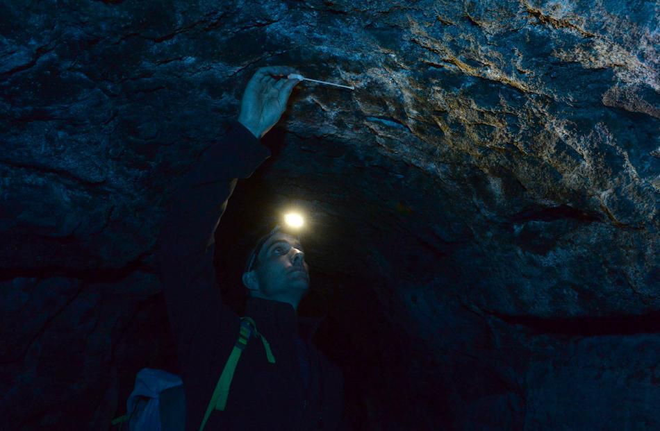 Whitestone Cheese head cheese-maker Chris Moran takes a mould sample in a former water race cave on an Ardgowan farm, near Oamaru.