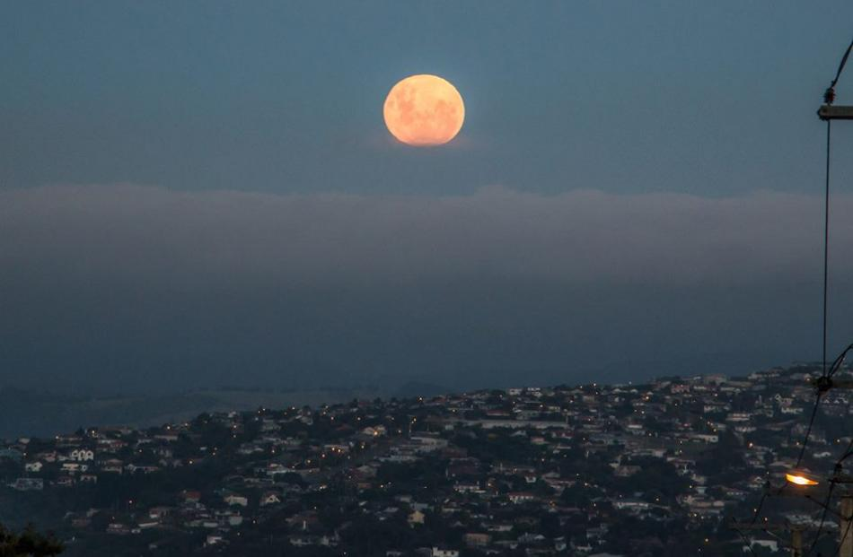 A wolf moon rises over Otago Harbour in Dunedin.  Photo: Brad Phipps