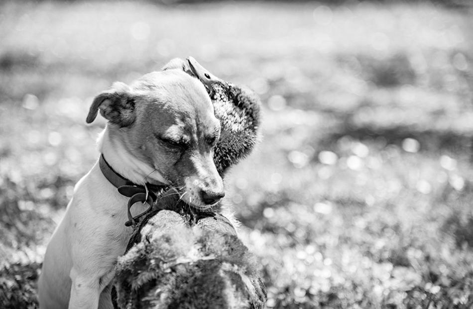 Daffy the Duck and Roise the dog in early December. Photo: Michael Smith