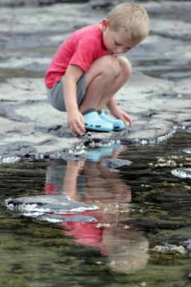 Drew Szavay (5) spent hours discovering all the creatures in the rock pools on the petrified...
