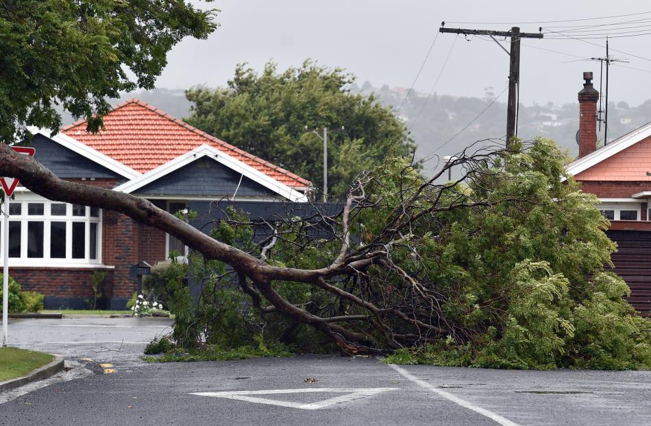 A tree blocks the corner of Bay View Rd and Pretoria St after severe weather yesterday.  Photo:...