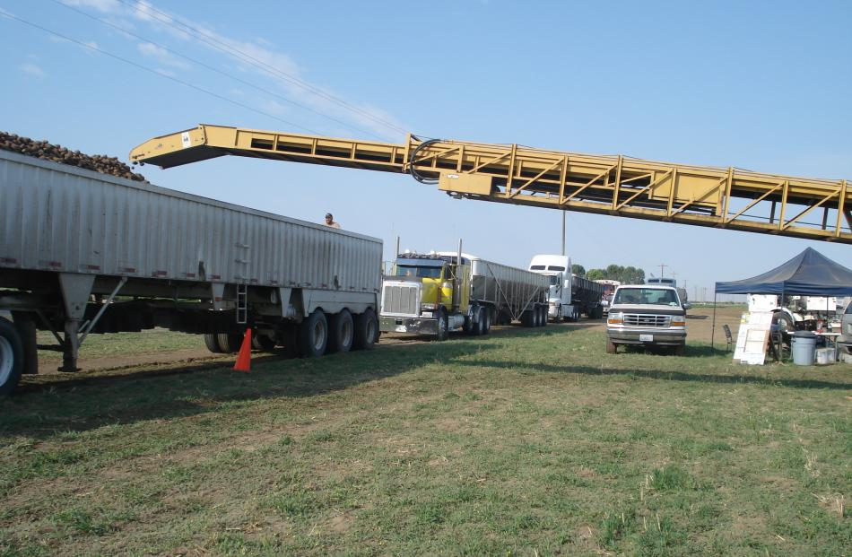 Potatoes are transferred into an 18-wheeler semi truck, with more queuing behind it.