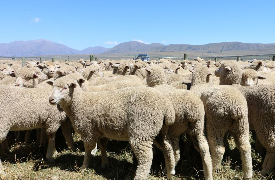 Quest for quality pays off at sale | Otago Daily Times