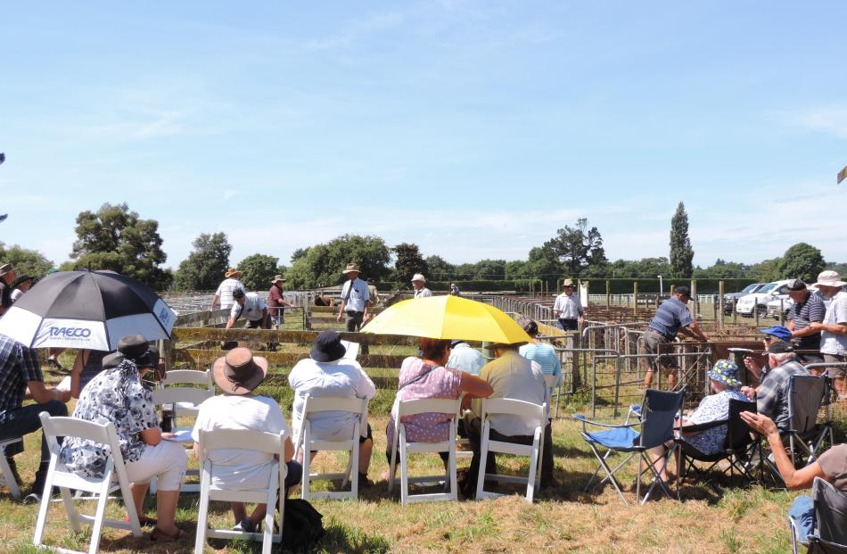 The improvised sale ring meant the gallery was bathed in hot summer sun at the Waimate showgrounds.