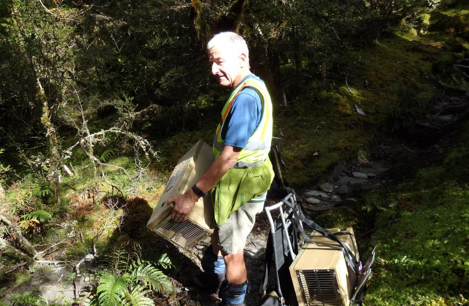 Matukituki Charitable Trust volunteer John Hogg with traps he has carried on his back up the West...