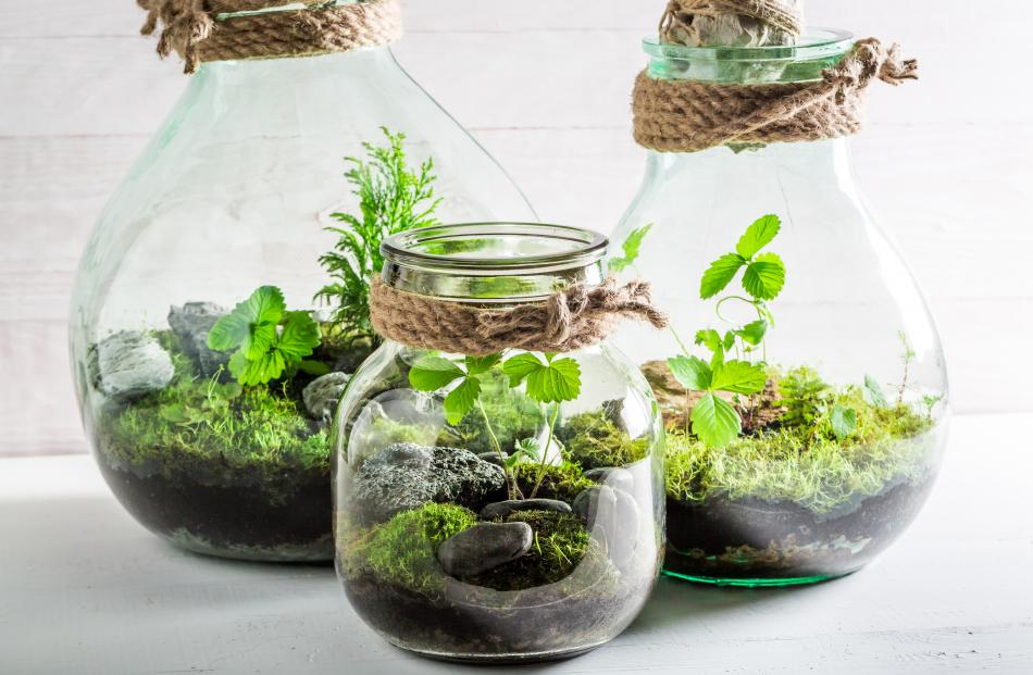 Almost any jar, vase, or vessel can be used for a terrarium.