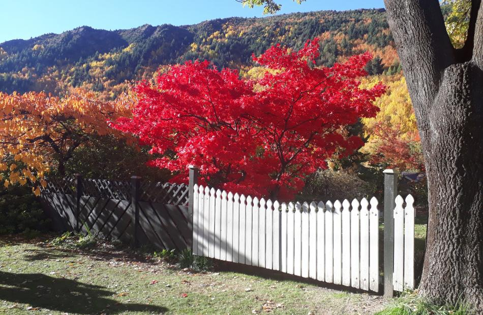 View of an Arrowtown garden. PHOTO: John Turnbull