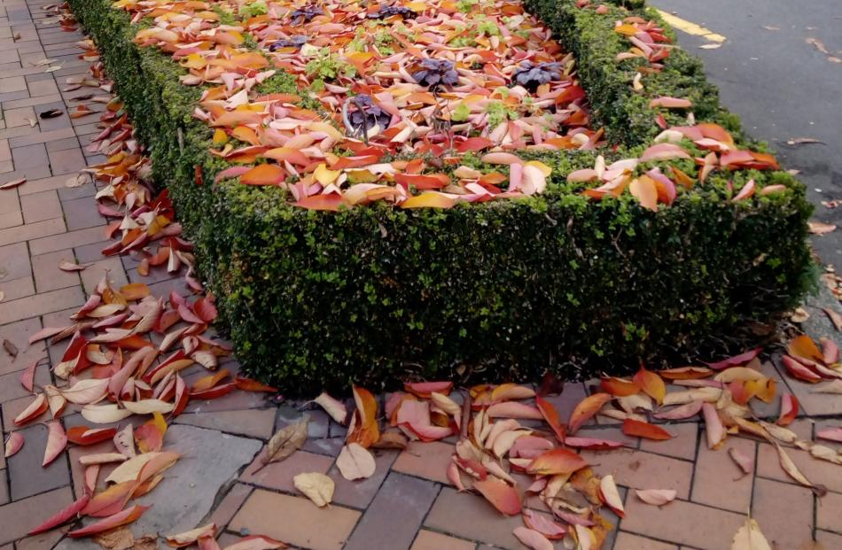 Fallen leaves in the Octagon. PHOTO: Phillipa Crack