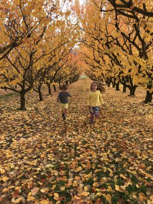 Millie (6) and Lewis (3) Garside play in leaves at Clyde. Photo: Lucinda Garside