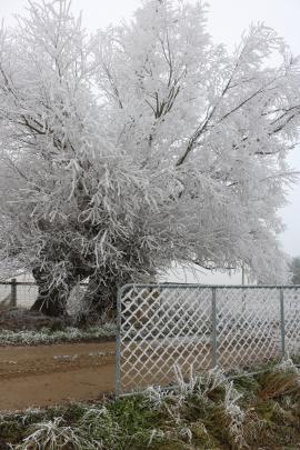 Hoar frosts take their toll near the Poolburn Adventure Hub. Photo: Tom Kitchin