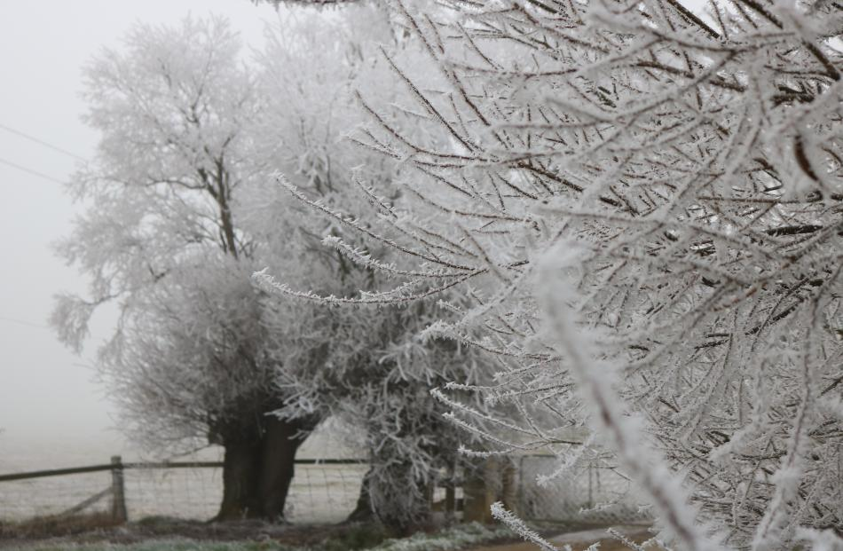 Mist and fog drenched Poolburn as a hoar frost took shape in the area. Photo: Tom Kitchin