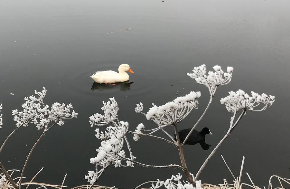 A cold but peaceful scene at Aronui Dam, Alexandra. Photo: Joy Bennett
