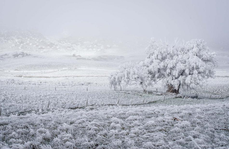 Richard Healey took some amazing snaps of the hoar frost on a trip through SH85, Omakau, Lauder,...