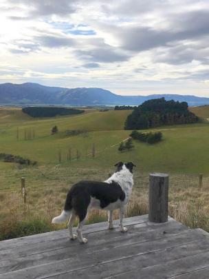 Even resident dog Hank looks impressed with the view.