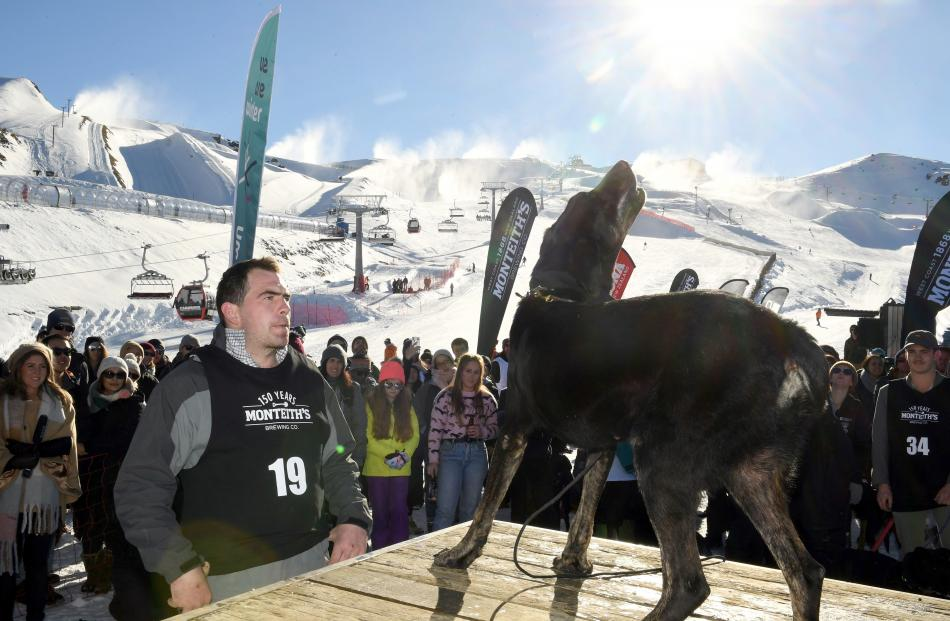 Zac Glover, of Mossburn, encourages his  dog Brin in the dog-barking.