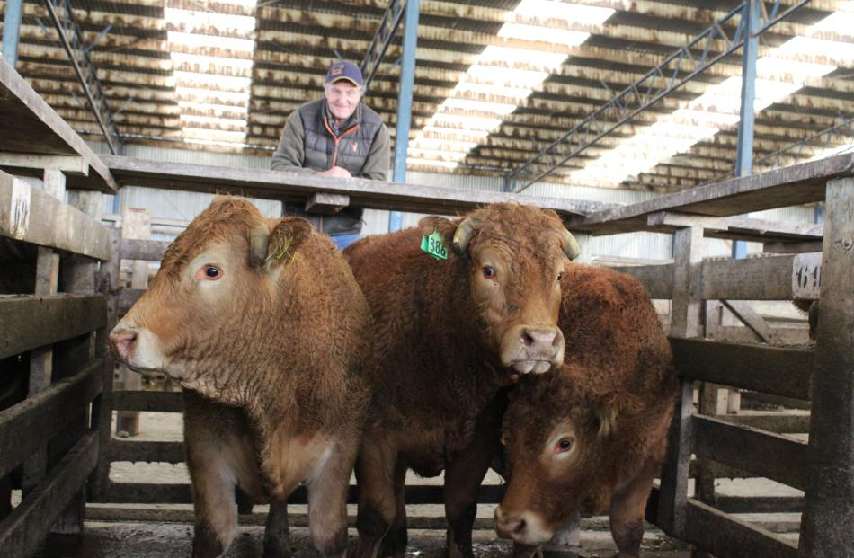 Evan Ferris, of Waikaia, looks over his winning entrant in the on-the-hoof section, far left, which was awarded the Doug Lindsay Memorial Trophy at the Charlton saleyards last week. Photos: Nicole Sharp