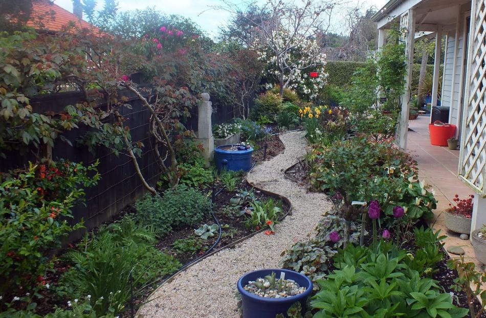 The Hills' new garden is packed with plants - and there is no lawn to mow. PHOTOS: GILLIAN VINE