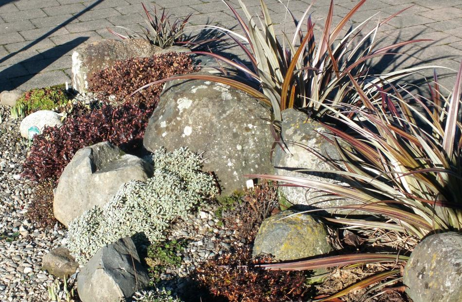 A new rockery by the drive gave the Collies a spot for some treasured alpines.