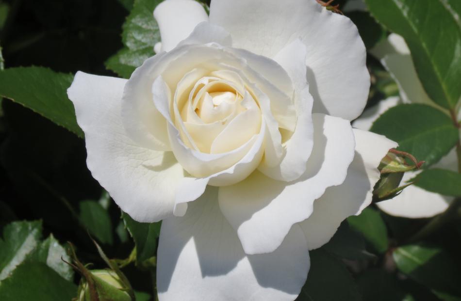 White Romance