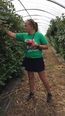 Sarah picks raspberries at Blacketyside Farm in Fife.
