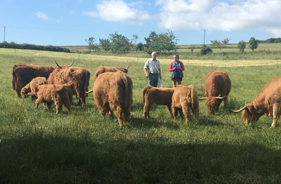 Checking out some Scottish Highland cattle.