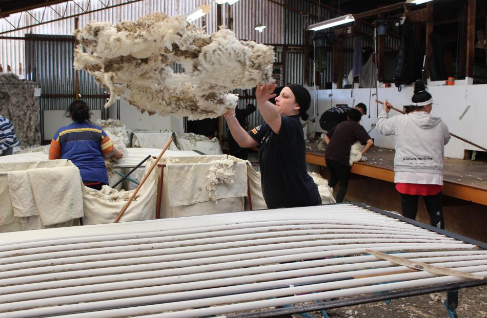 Rousie Amy Ferguson throws up a merino fleece to prepare it to be laid out to be sorted. PHOTO:...