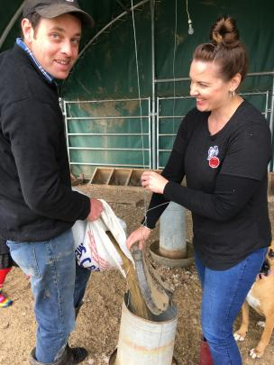 Crozier's Free Range Ltd owners Kyle and Monique Smith top up feeders for the breeders with grain and pea blend. Photos: Toni Williams