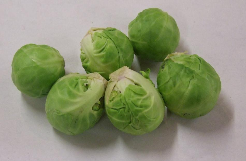 Ideally, Brussels sprout seedlings should be planted by Christmas.