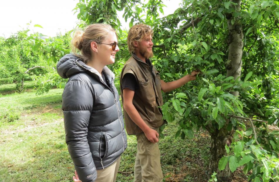 Hollandia Orchard worker Jonathan Bates, of Alexandra, and Seasonal Solutions' regional labour co-ordinator Laura Sutherland listen to orchard manager Murray Booth.
