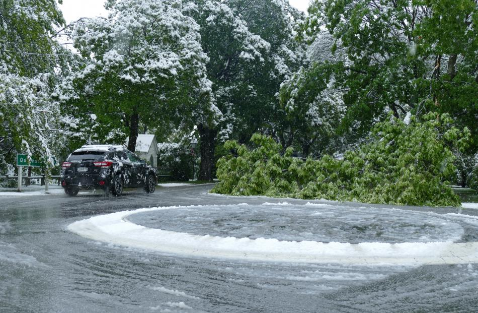 A fallen tree in Arrowtown. Photo: Joshua Walton