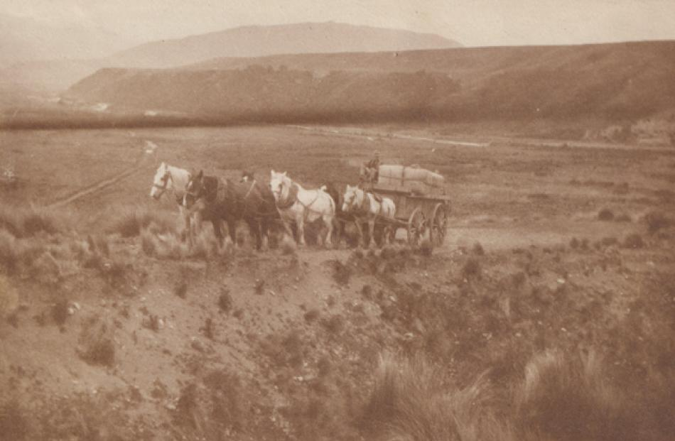 The Redcliff team of horses heading up the Blackmount Hill with wool bales (They could only take...
