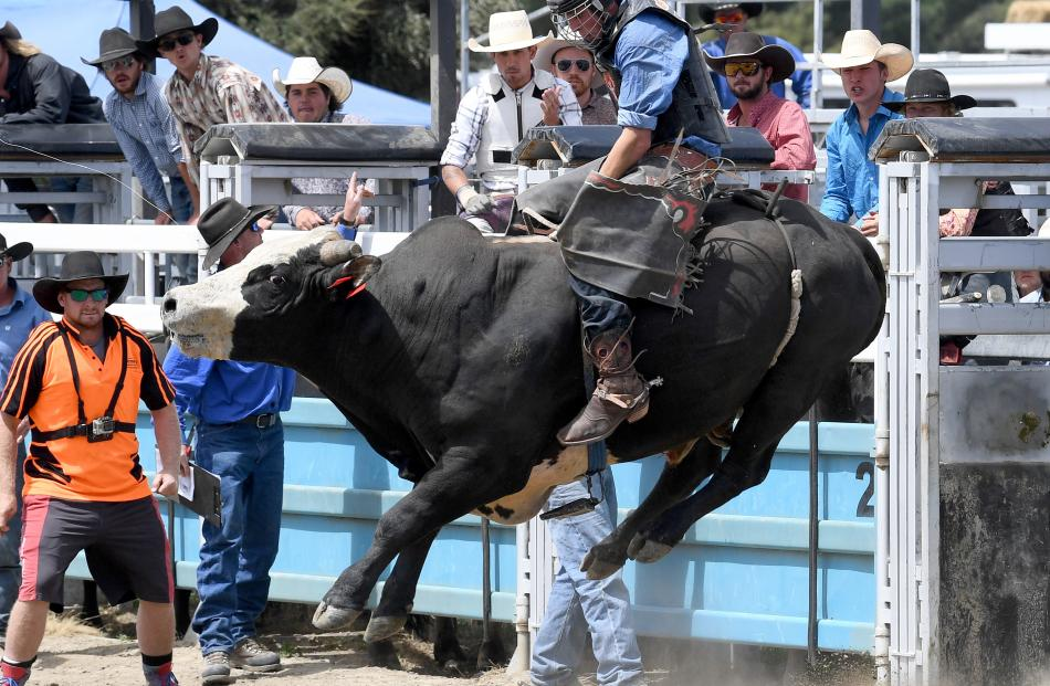 Cody Milton, Middlemarch, in the open bull ride.