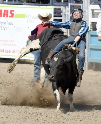Luke McKerchar, from Roxburgh, in the novice steer ride at the Wanaka rodeo.