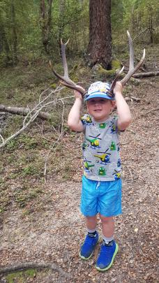 Alex McConnell (3) sports the dropped antlers found on a bush walk at Piano Flat. Photo: Jess McConnell