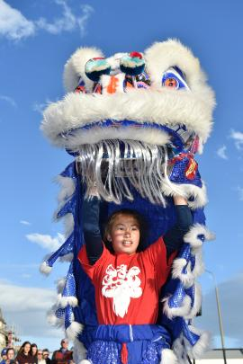 Olivia Hall (14), of the Lion Dance Troupe, springs to life in a ceremonial lion, as part of the...