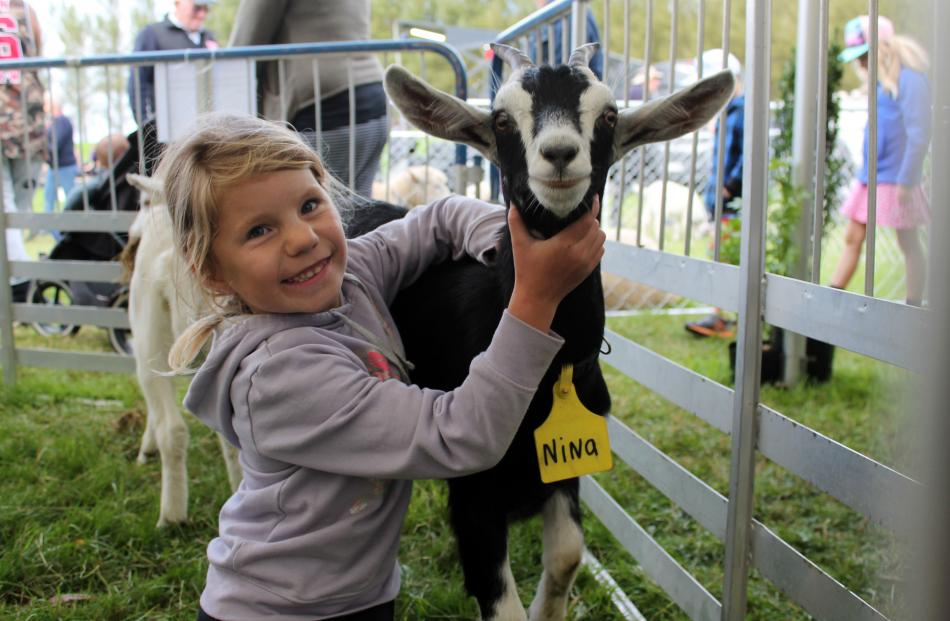 Emilia Kruskopf (7) shows her goat Nina to spectators at the Southland A&P Show on Saturday....