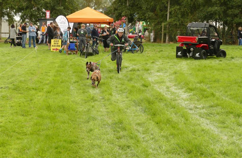 Invercargill man Owen McGimpsey is off to a flying start in the dog sled demonstration, assisted...